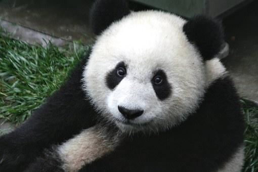 Алгоритм Панда